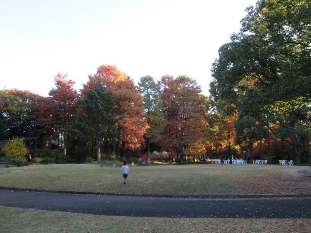 服部緑地 都市緑化植物園 芝生広場