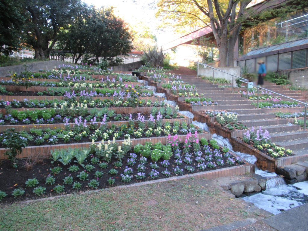 服部緑地 都市緑化植物園 花壇