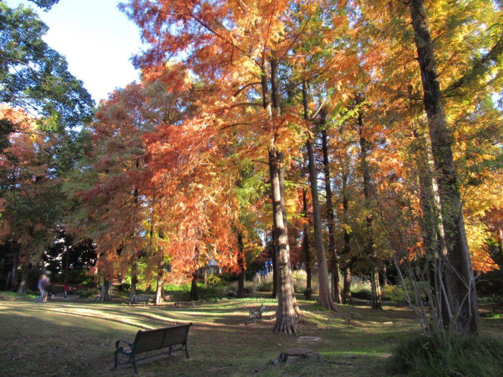 服部緑地 都市緑化植物園 紅葉