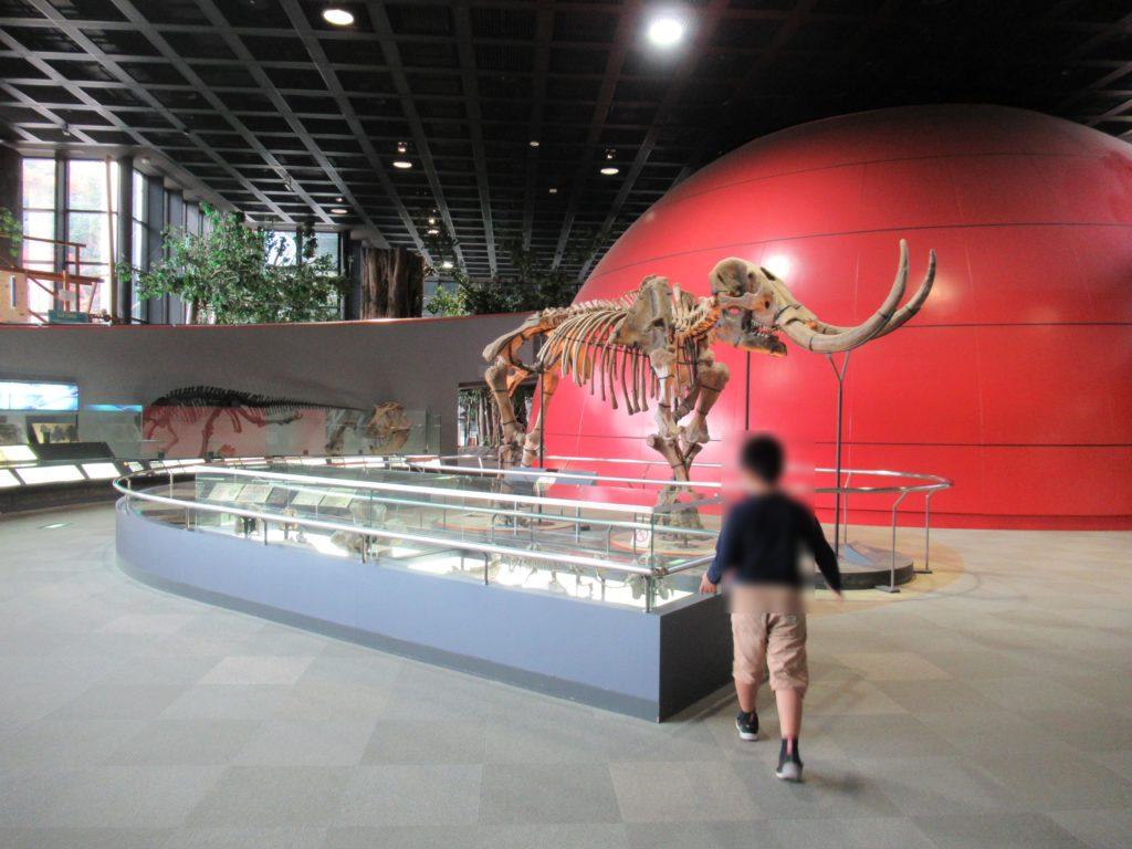 兵庫県立 人と自然の博物館(ひとはく)アメリカマストドン