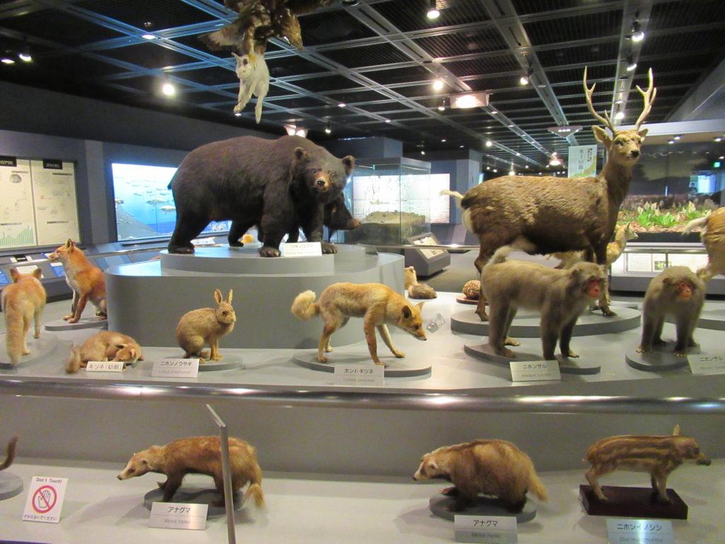 兵庫県立 人と自然の博物館(ひとはく)剥製