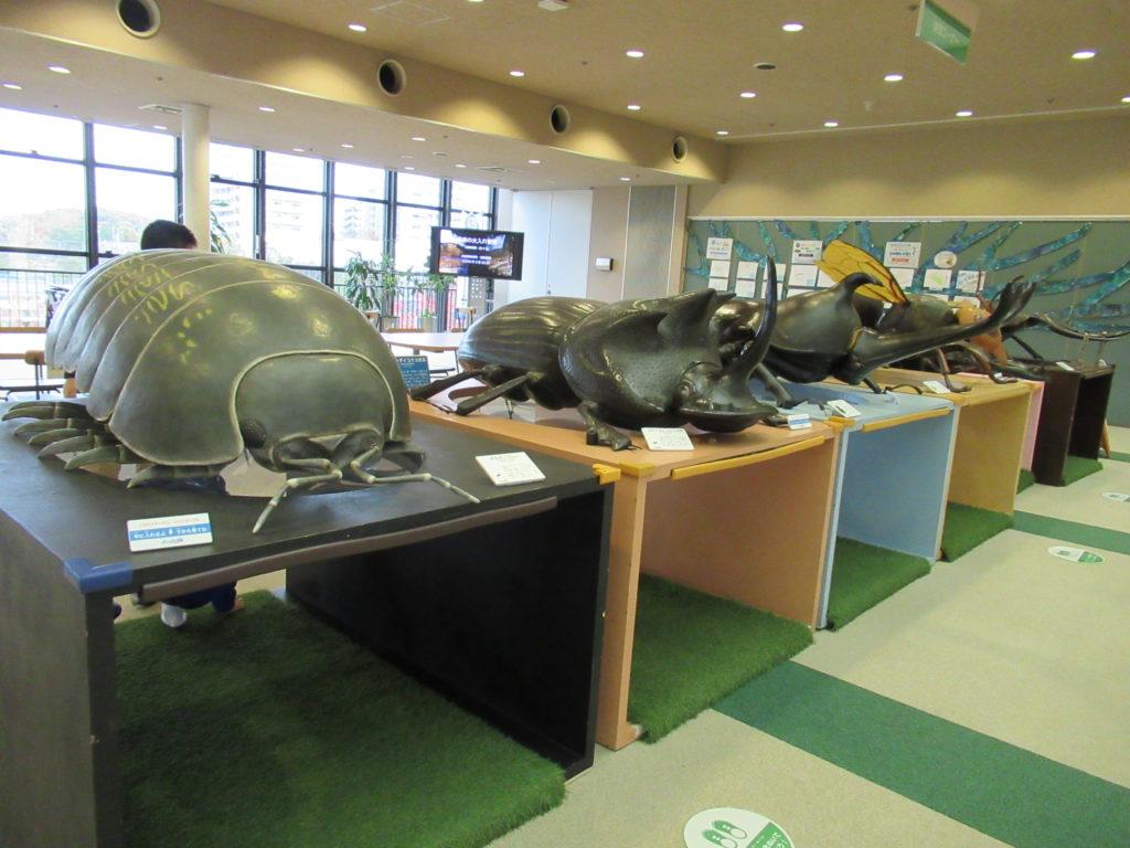 兵庫県立 人と自然の博物館(ひとはく)ひとはくサロン 昆虫