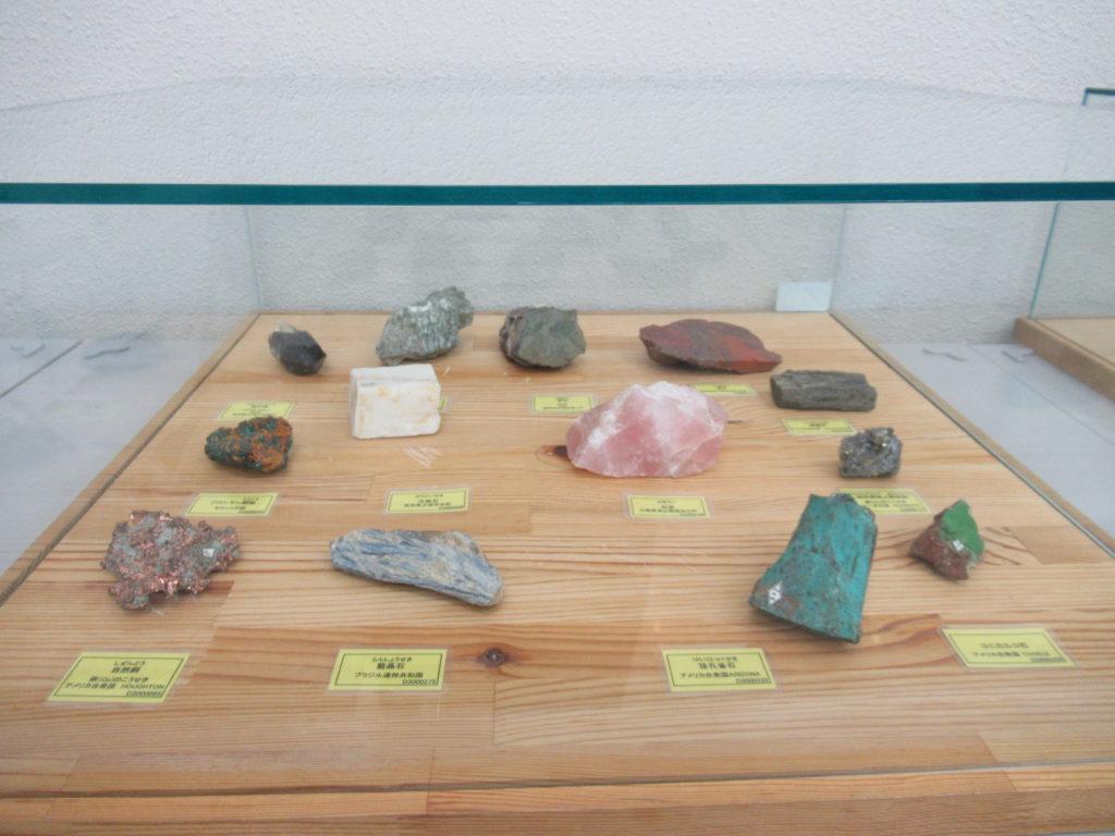 兵庫県立 人と自然の博物館(ひとはく)ひとはくサロン 標本