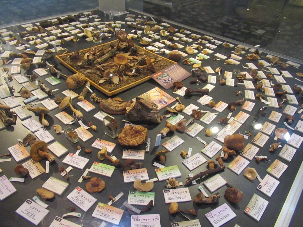 兵庫県立 人と自然の博物館(ひとはく)きのこ